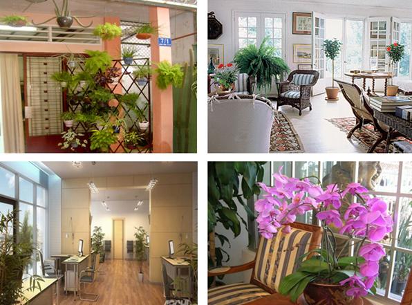 Bài 12: Trang trí nhà ở bằng cây cảnh và hoa | Học trực tuyến