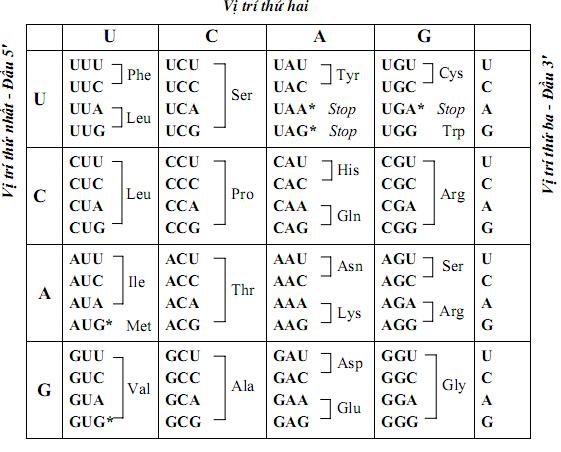 Bảng mã di truyền