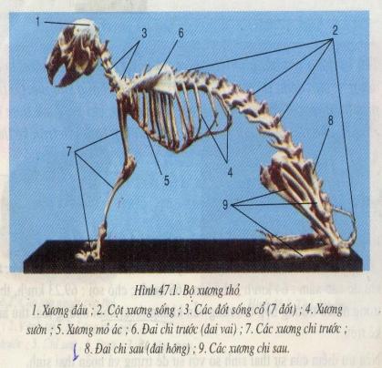 Kết quả hình ảnh cho cấu tạo trong của thỏ
