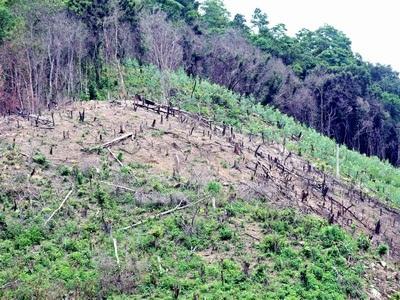 Image result for hiện trạng sử dụng tài nguyên rừng